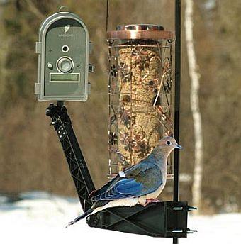 wingscapes birdcam pro digital wildlife camera