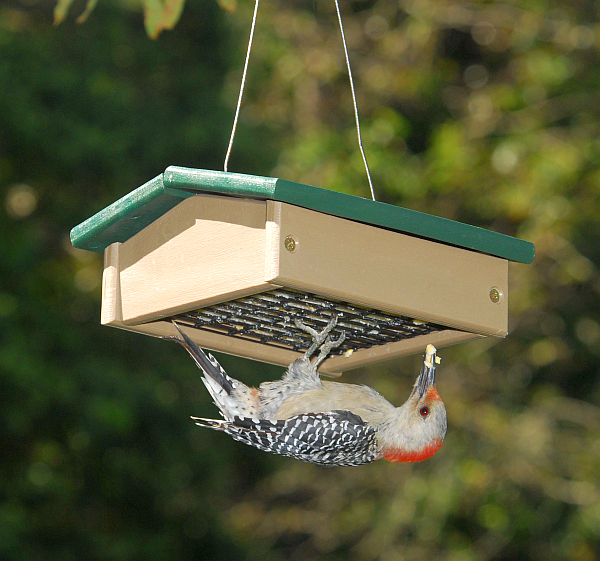 how to build an upside down suet feeder