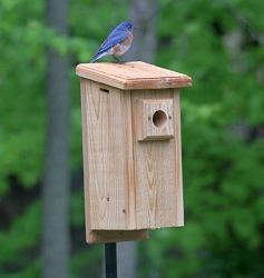 Birds Choice Front Open Standard Bluebird House