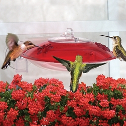 Droll Yankees Window Hummer 3 Hummingbird Feeder