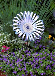 Daisy SunSations Solar Spinner Set of 3