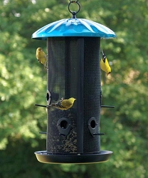 Royal Buffet Dual Seed Feeder