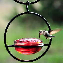 Sphere Hummingbird Feeder