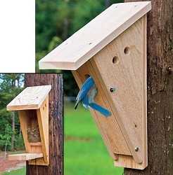 Sparrow resistant bluebird slot bird house quality for Sparrow birdhouse plans