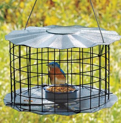Mealworm Barrier Guard Caged Bluebird Feeder