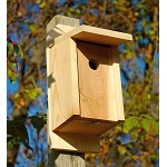 Eastern Bluebird Joy Box
