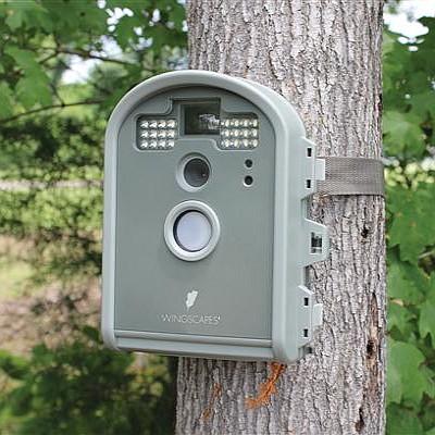 birdcam wireless nature camera wingscapes birdcam pro digital