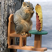 Squirrel Feeders, Houses & Food