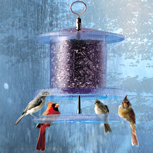 Mixed Seed Feeders