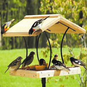 Fly-Through Feeders