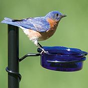Bird Feeder Poles & Accessories