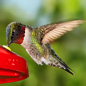 Hummingbird Accessories