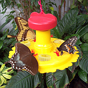 Butterfly Feeders & Food