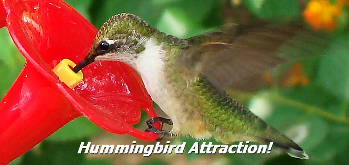 Hummingbird Feeders and Accessories
