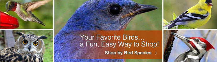 Shop by Bird Species
