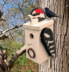 Amish Hand-Made Shaped Bird House Woodpecker