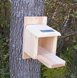 Conservation Peanut Munch Box Squirrel Feeder