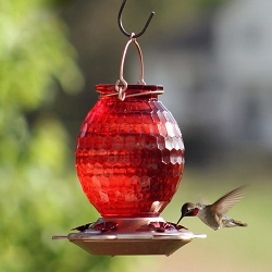 Gem Red Cut Glass Hummingbird Feeder 22 oz.