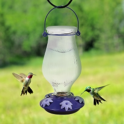 Grand Oasis Top-Fill Glass Hummingbird Feeder Set of 2