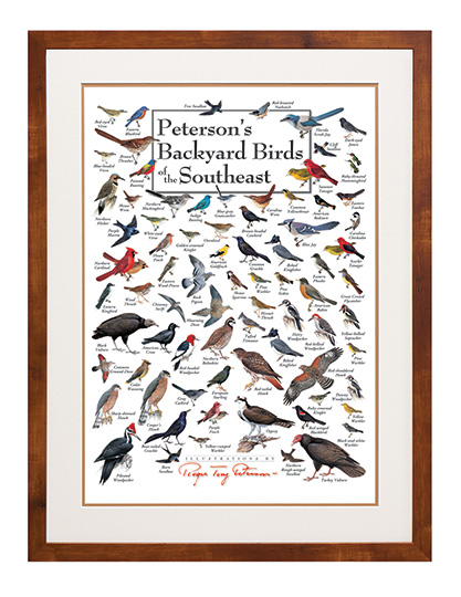 peterson s backyard birds of the southeast poster rh bluebirdlanding com peterson's backyard birds of the northeast poster peterson's backyard birds