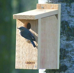 Bluebird View Thru Nest Box