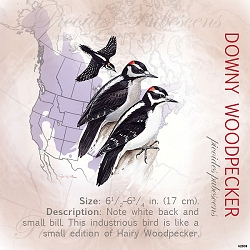 Downy Woodpecker Eco Magnet