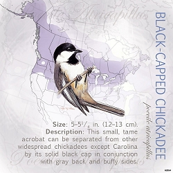 Black-Capped Chickadee Eco Magnet