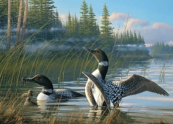 Common Loons 1000 Piece Jigsaw Puzzle