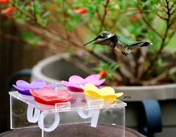 Hummer Ring™ Hummingbird Feeder Trainer with 4 Rings