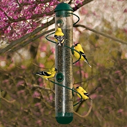 Bird Quest Green Spiral Sunflower Feeder 17