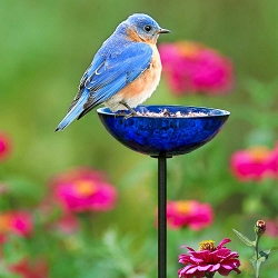 Poppy Stake Bird Feeder