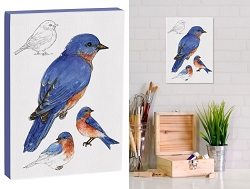 Field Guide 5x7 Canvas Eastern Bluebird