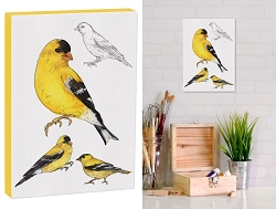 Field Guide 5x7 Canvas American Goldfinch