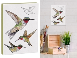 Field Guide 5x7 Canvas Ruby-Throated Hummingbird