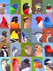 Backyard Bird Friends 1000 Piece Jigsaw Puzzle