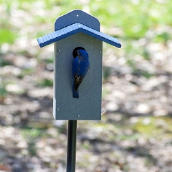 Green Solutions Recycled Plastic Bluebird House Gray w/Blue Roof
