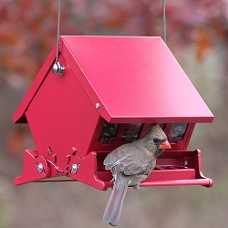 Absolute II Mini Squirrel-Proof Bird Feeder