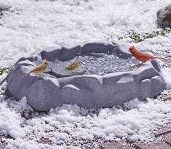 The Never Frozen Bird Bath