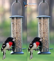 Economical Seed Tube Feeder 8