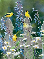 Goldfinch Quartet 500 Piece Jigsaw Puzzle