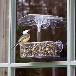 Observer Window Bird Feeder