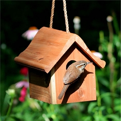 Select Cedar Hanging Wren House