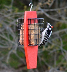 Recycled Plastic Dual Tail-Prop Suet Feeder Red