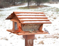 Super Bird Feeder