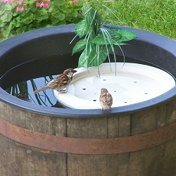 Floating Bird Bath Raft