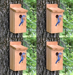 Town & Country Cedar Bluebird House 4/Pack