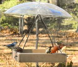 Recycled Plastic Small Hanging Tray with Clear Weather Dome