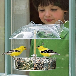 Droll Yankees Multi-Purpose Window Bird Feeder