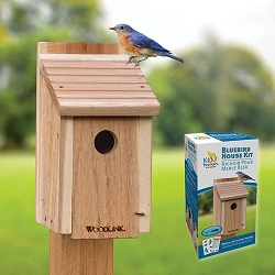 Bluebird House DIY Craft Kit 6-Pack