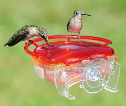 Gem Window Hummingbird Feeder